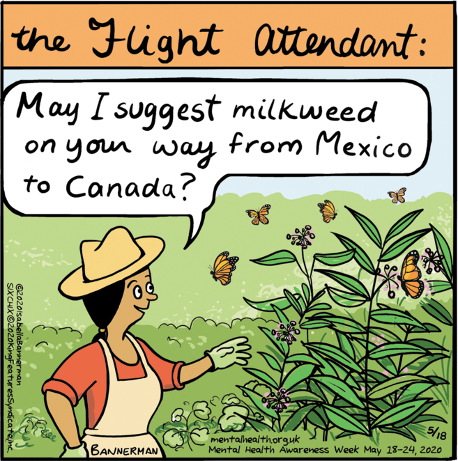 Butterfly cartoon